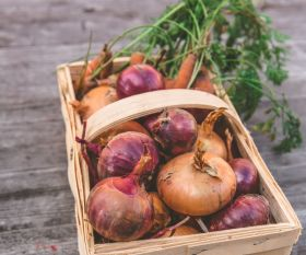 Focus on future at Onion & Carrot Conference