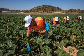 Spanish veg prices soar in wake of lockdown