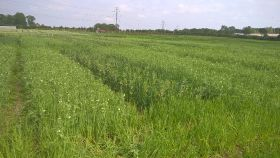 New research on sustainable crop mixtures