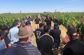 Australian Sun World growers target quality