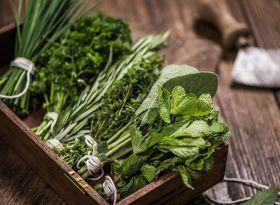 Urbotanica targets Asian expansion