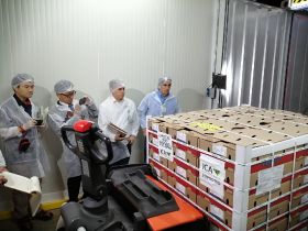 Colombia ships first Hass avos to Japan
