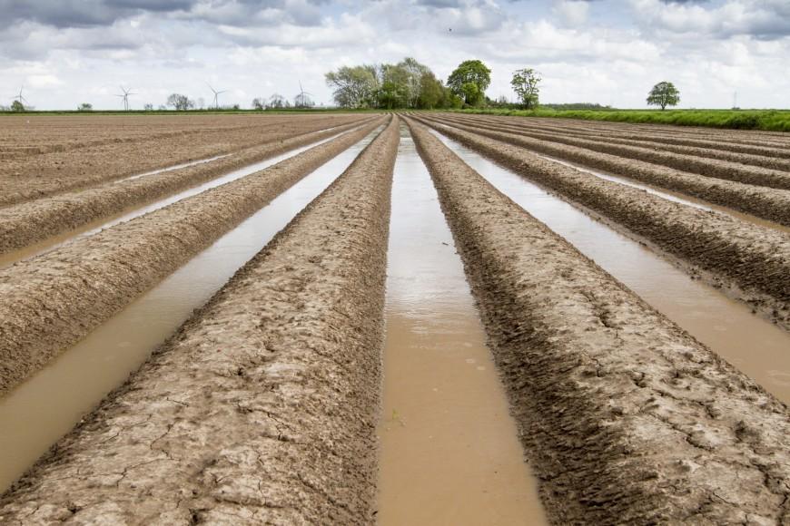 Wet weather hits potatoes