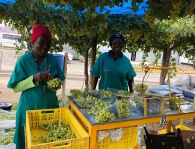 Southern Africa kicks off grape campaign