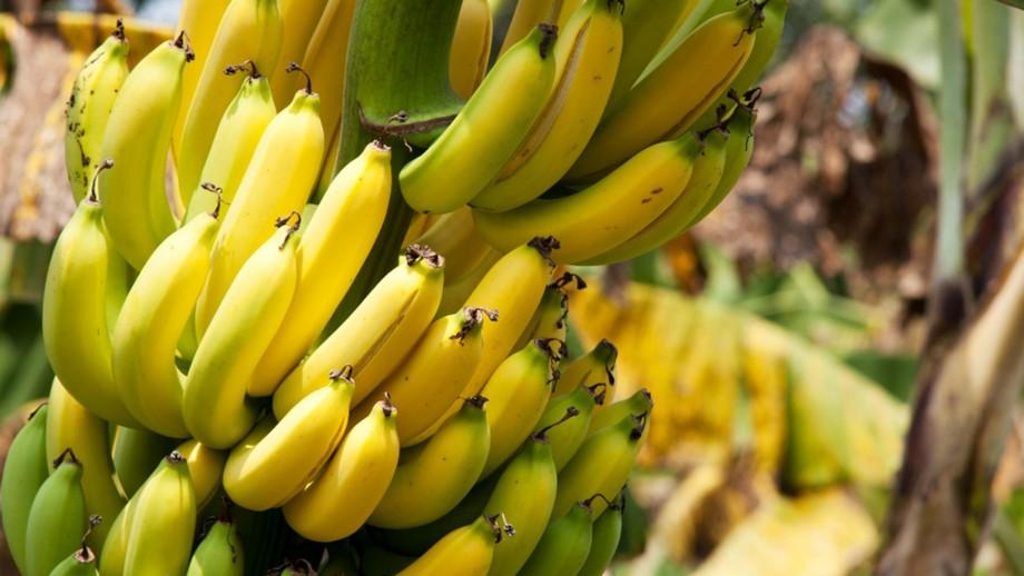 Ecuador: banana prices 'not enough'