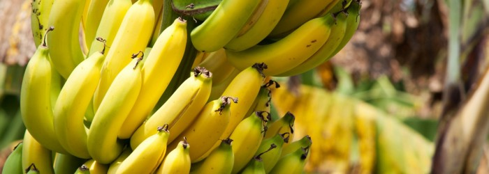 Ecuador: banana prices 'not enough'