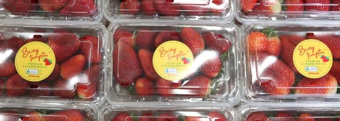 SA strawberry launch sets record