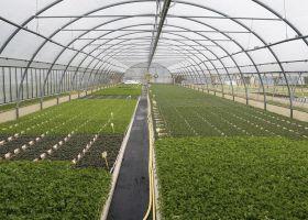 China's greenhouse goals