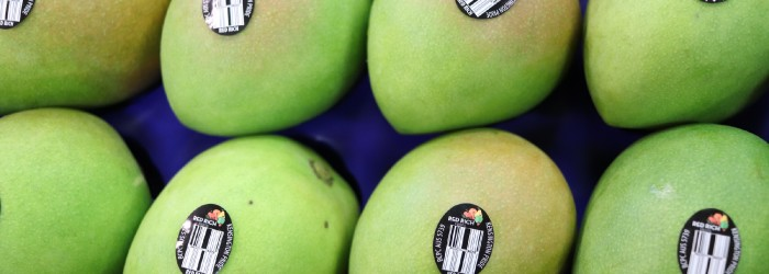 Record haul for top-end mangoes