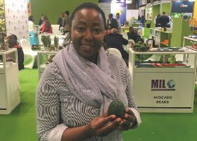 Avocados empowering women in Kenya