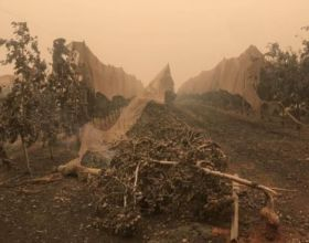 More bushfire support for growers