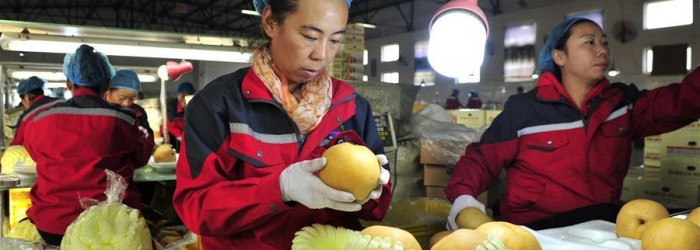 Chinese pears target export to Brazil