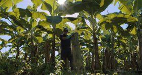 Chiquita counts cost of Panama strike
