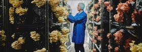 Plant-based food drives mushroom sales