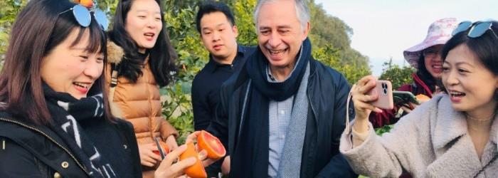 Italian blood oranges gaining popularity