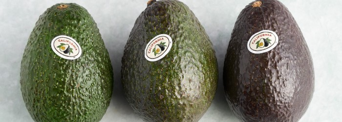 Promising season ahead for CA avocados