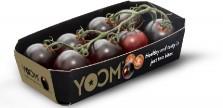 Yoom tomatoes
