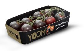 Tomato tie-up for Syngenta and Dole China