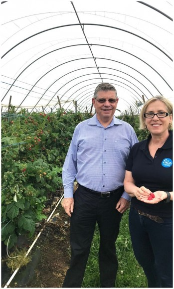 Harry Debney & Ros Harvey in berry polytunnel