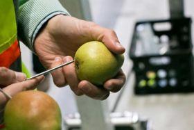 Conditioned pears prove profitable