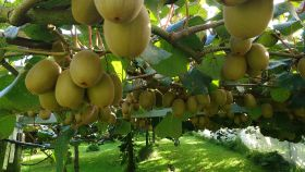 Zespri eyes legal action in China