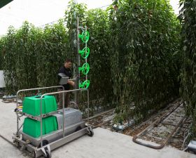 Sprouting agri-tech