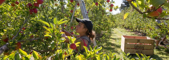 Online sales key to early season fruit
