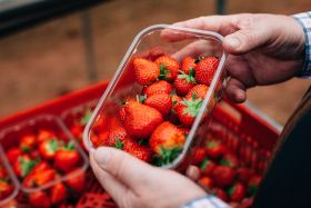 British strawberries arrive in Aldi