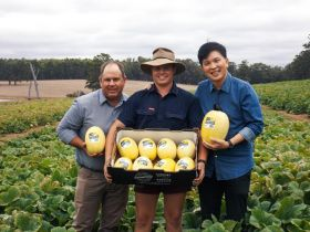 DiMuto and Morning Glory Farms join forces