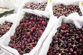 Australia targets traceability