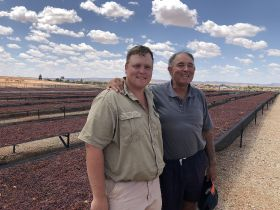 South Africa invests in raisin drying in exports push