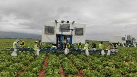 Value of Spanish F&V exports climbs in 2020