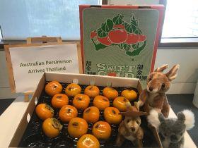 First Australian persimmons reach Thailand