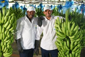 Colombian banana companies show they care