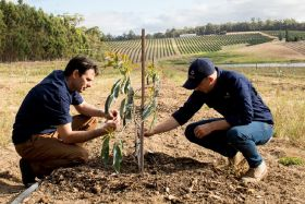 Avocado production set to increase in Western Australia