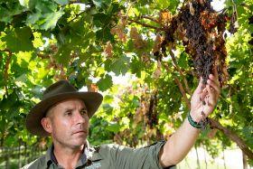 RSA raisin exports continue despite delays
