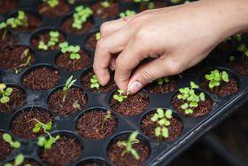 Coronavirus prompts urban farming interest