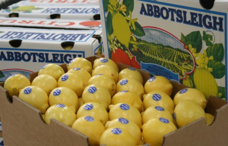 4. Abbotsleigh Lemons