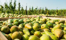 SA exporters bullish for UK fruit supplies