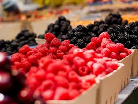 Pairwise and PSI to bring new berry varieties to US