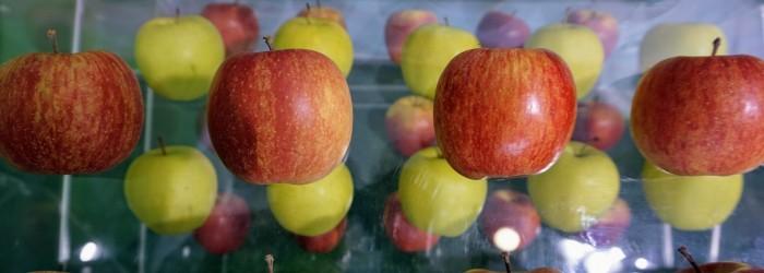 Italian apples gain access to Thailand