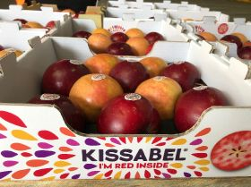 Kissabel SH takes commercial strides