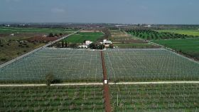 Arrigoni offers stonefruit protection