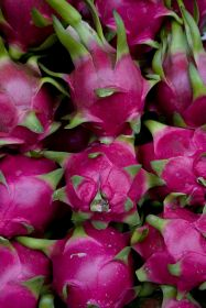 China grants access to Indonesian dragon fruit