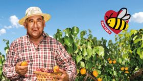 SanLucar puts bees centre stage