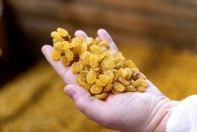 Increased demand for RSA raisins
