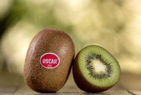 Primland upbeat on Chilean kiwifruit