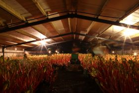 Rhubarb grower expands Yorkshire production