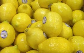 Chilean citrus makes Chinese debut
