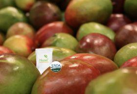 Hazel announces new mango partnership